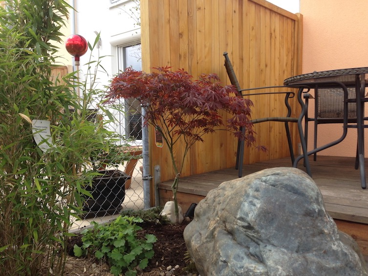 Das kleine Holzdeck am Haus wird von einem roten Fächerahorn, Bambus und einem Quellstein begleitet. (Poing bei München)